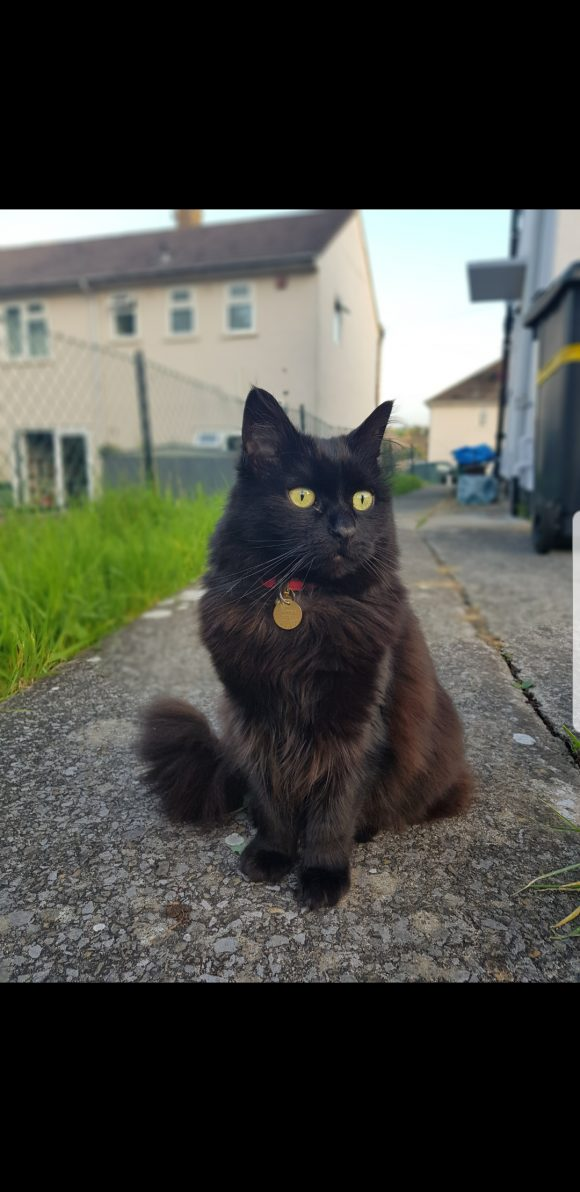 Black cat missing in Highridge Bs13
