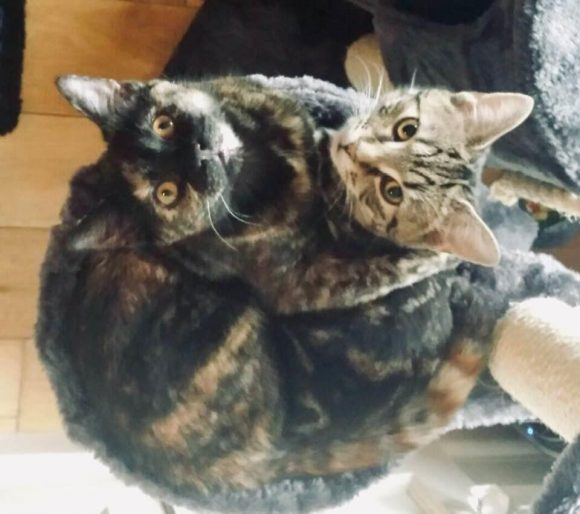 Missing female tortoiseshell