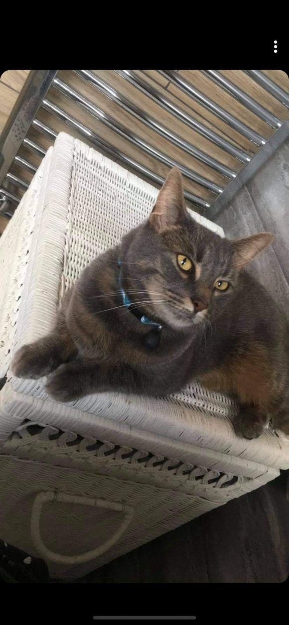 Missing cat hartcliffe/withywood