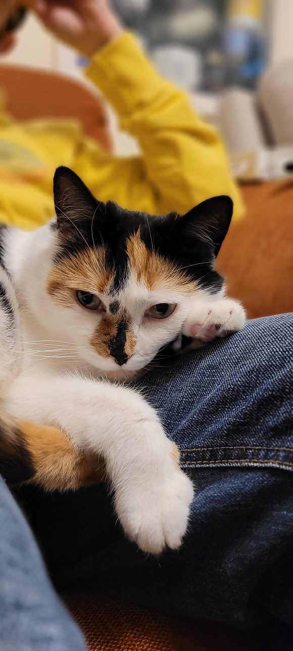 Lost indoor house cat- Stockwood Bristol