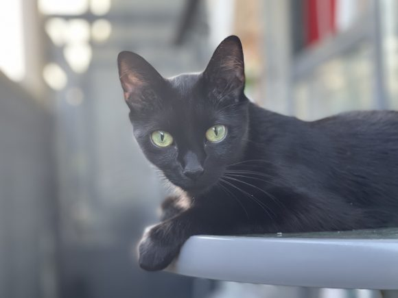 Missing cat – St George