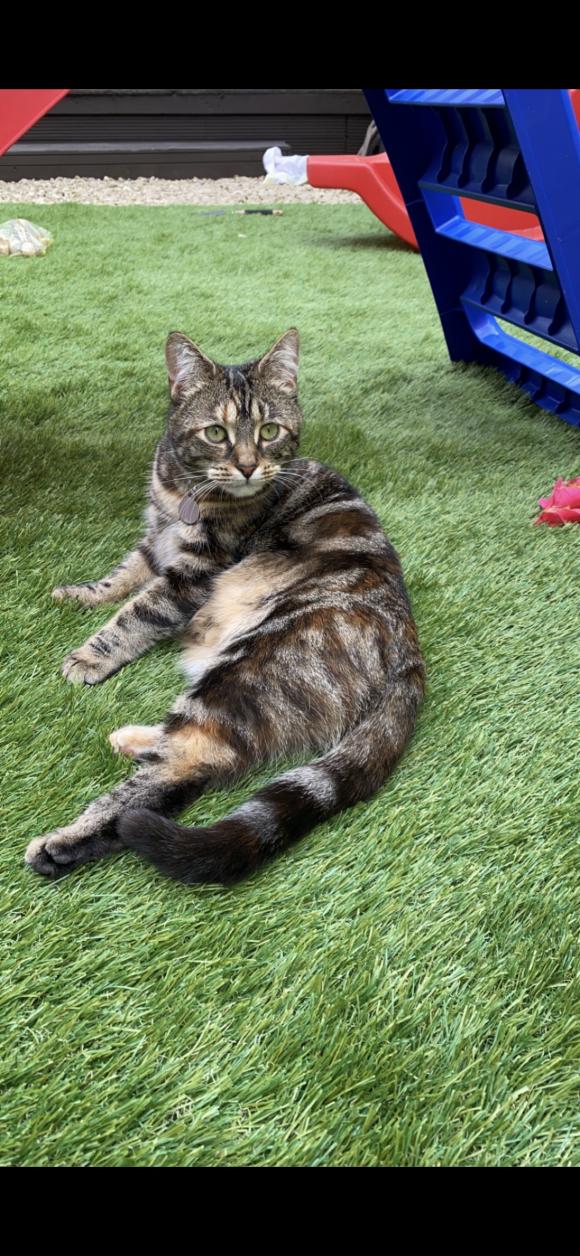 Missing cat BS5-Thatchers Close