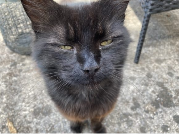Missing from Yate and Chipping Sodbury (BS37)